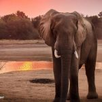 Pachyderms Petition GOP to Drop Party's Elephant Symbol